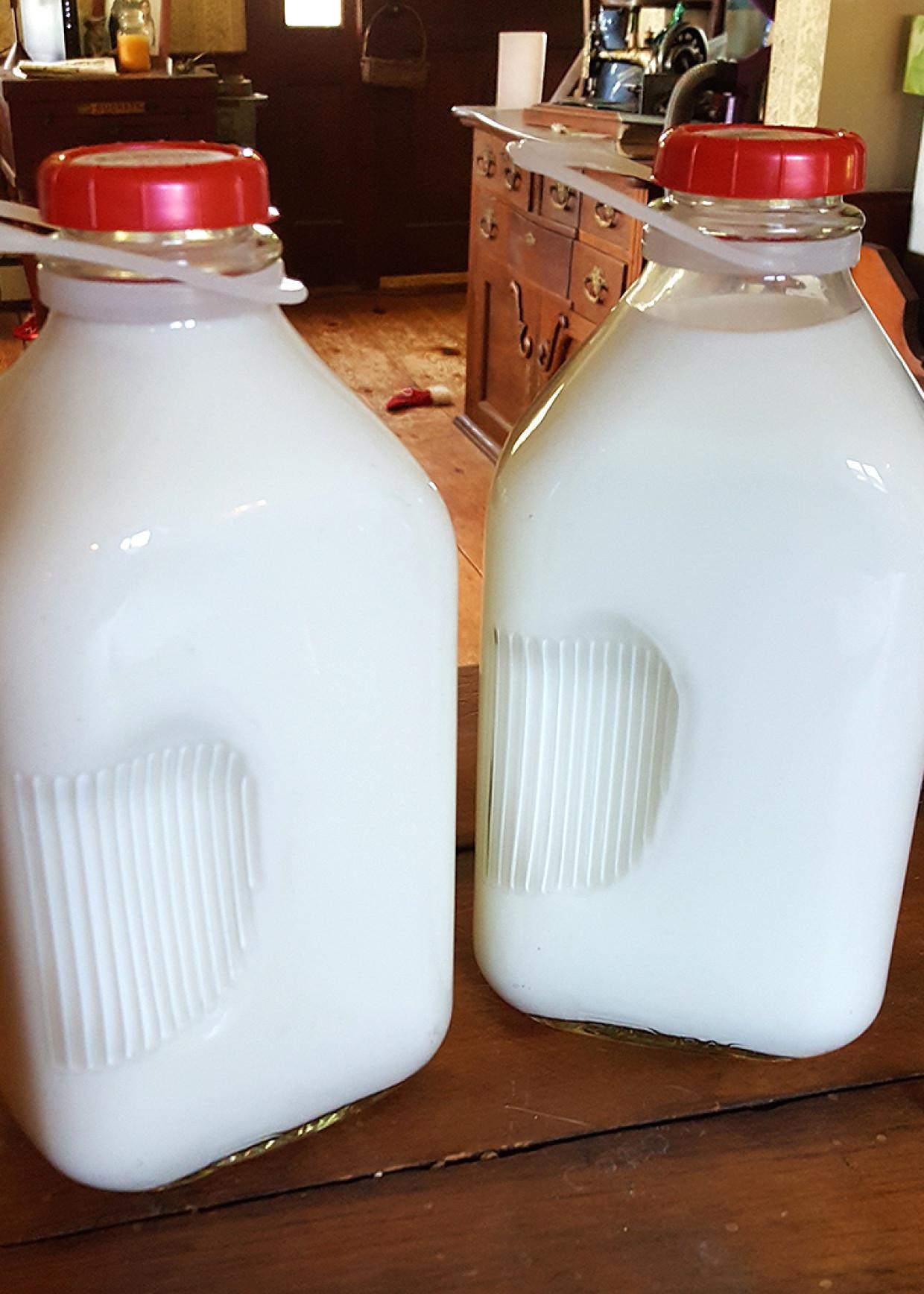 Goat Milk for Sale