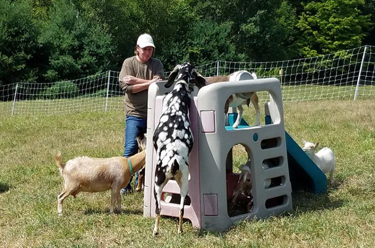 Pearl Nubian goat Loudon, NH